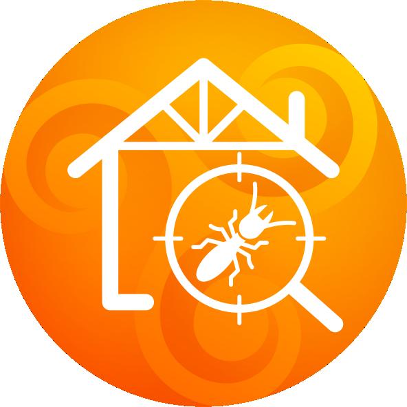 Agence NEWTON - Termites